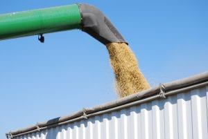Soja transgênica cosit cooperativa agrícola Crédito: United Soybean Board/ Flickr cooperativa_agricola_soja-cargill
