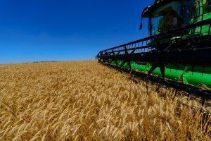 agronegócio-colheita-trigo-plantação-cargill-carf