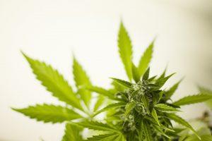 reincidência política de drogas