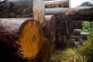 meio ambiente madeira ilegal EUA Amazônia