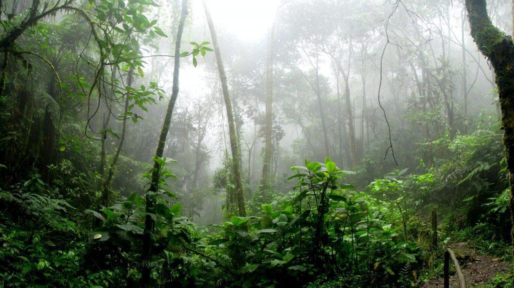 Floresta amazônica com névoa durante o dia