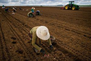 Pequenos produtores rurais têm dificuldades de acesso à recuperação judicial