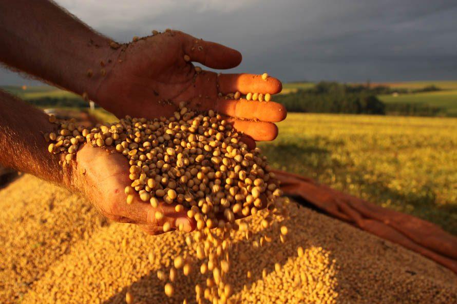 soja agro produtor rural recuperação judicial