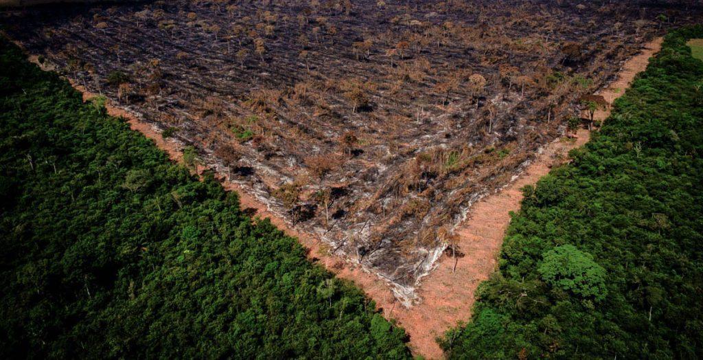 Luta contra o desmatamento no Brasil faz parte da agenda ESG